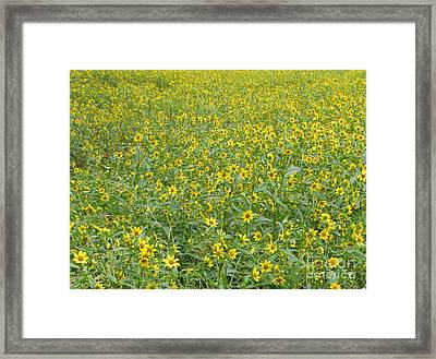 Yellow Meadow Framed Print by Joshua Bales