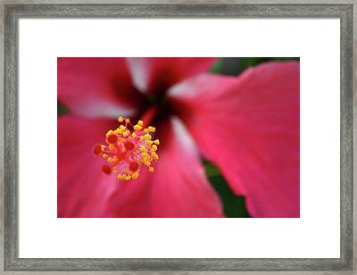 Yellow Polen Framed Print by Frederico Borges