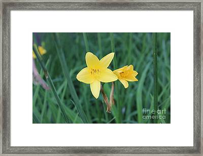 Yellow Rays Framed Print by Linda Meyer