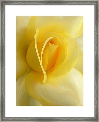 Yellow Rose Portrait Framed Print by Jennie Marie Schell