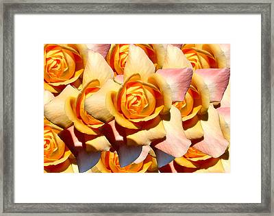Yellow Roses Framed Print by Diana Burlan