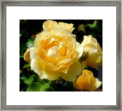 Yellow Roses Framed Print by Jacqueline Dagenais