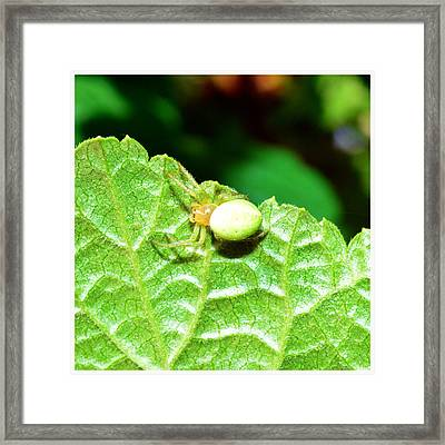 Yellow Spider  Framed Print by Toppart Sweden