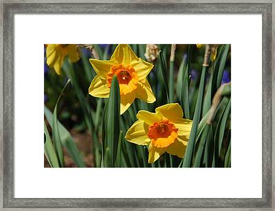 Yellow Star Framed Print by Aimee L Maher Photography and Art Visit ALMGallerydotcom