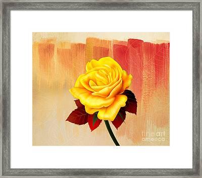Yellow Tea Rose Framed Print by Bedros Awak