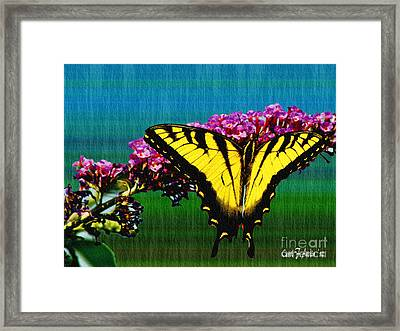 Yellow Swallowtail Butterfly Framed Print by Carol F Austin