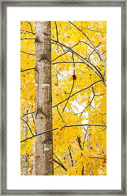 Yellow Tree Framed Print by Nathaniel Kidd