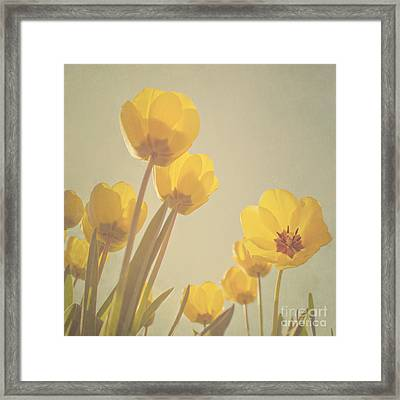 Yellow Tulips Framed Print by Diana Kraleva
