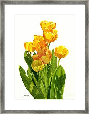 Yellow Tulips In The Sun Framed Print by Sharon Freeman