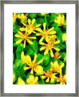 Yellow Wildflowers Framed Print by Susan Savad