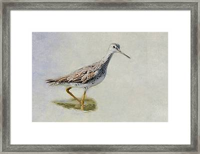 Yellowlegs Framed Print by Bill Wakeley