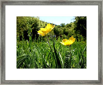 Yellows Framed Print by Lucy D