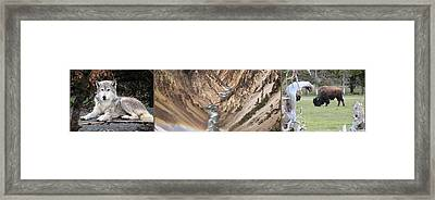 Yellowstone National Park Montana  3 Panel Composite Framed Print by Thomas Woolworth