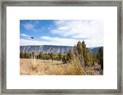 Yellowstone View Framed Print by Cindy Singleton