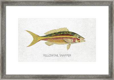 Yellowtail Snapper Framed Print by Aged Pixel