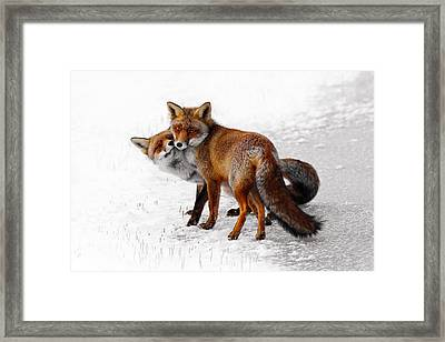 Yin Yang _ Red Fox Love Framed Print by Roeselien Raimond