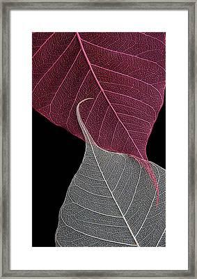 Yin-yang  Framed Print by Maggie Terlecki