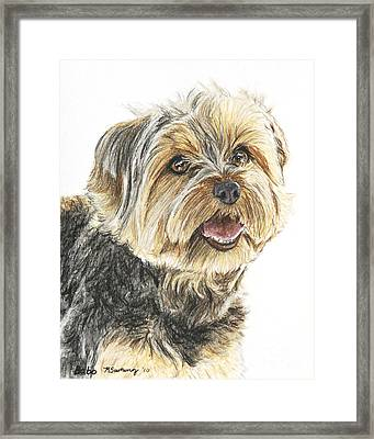 Yorkie In Color Framed Print by Kate Sumners