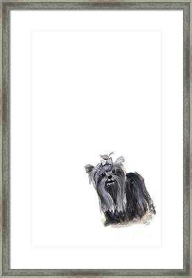 Yorkshire Terrier Framed Print by Barbara Marcus