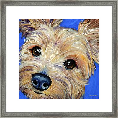 Yorkshire Terrier Framed Print by Melissa Smith