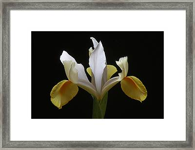 You Are Amazing Framed Print by Juergen Roth