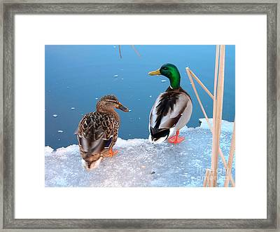 You Go First Framed Print by Tanya Hamell