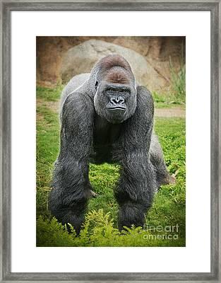 You Lookin At Me Framed Print by Jamie Pham