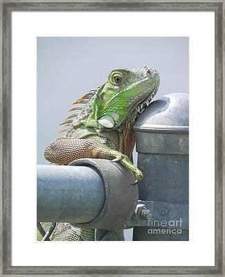 You Look'n At Me Framed Print by Chrisann Ellis