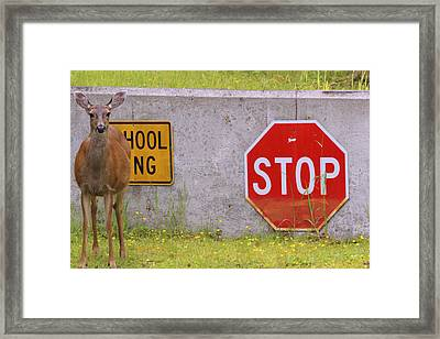 You Said Stop Framed Print by Kym Backland