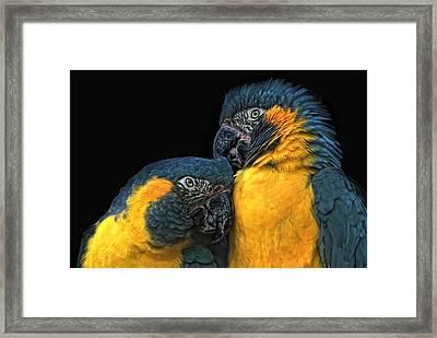 You Sexy Thing Framed Print by Joachim G Pinkawa