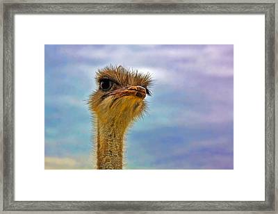 You Talkin To Me Framed Print by Gary Holmes