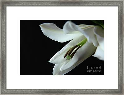 Young And Pure Framed Print by Eden Baed