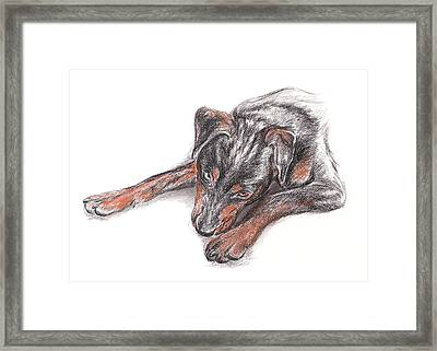Young Black Dog Portrait Framed Print by MM Anderson