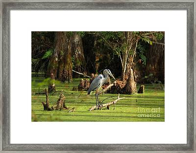 Young Blue Heron Framed Print by Theresa Willingham