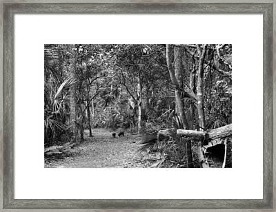Young Boar. Highlands Hammock S.p Framed Print by Chris  Kusik