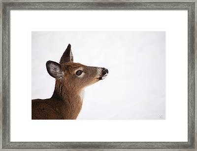Young Deer In Winter Framed Print by Karol Livote