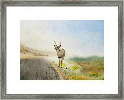 Young Deer On The Foggy Road Framed Print by Irina Sztukowski