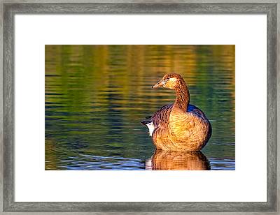 Young Goose Reflecting - Chattahoochee River Framed Print by Mark E Tisdale