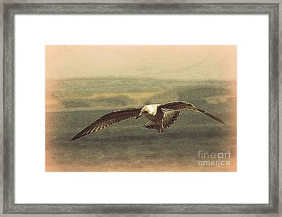 Young Gull Framed Print by Linsey Williams
