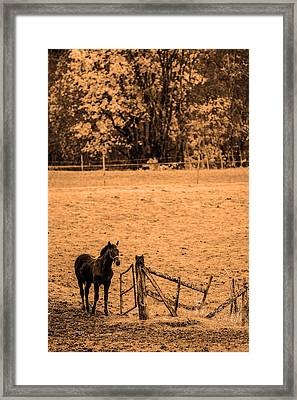 Young Horse Framed Print by Toppart Sweden