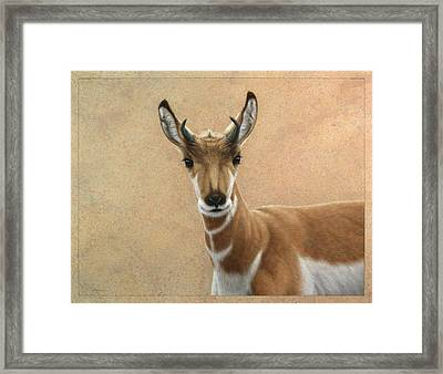 Young Pronghorn Framed Print by James W Johnson