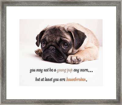 Young Pup Framed Print by Edward Fielding