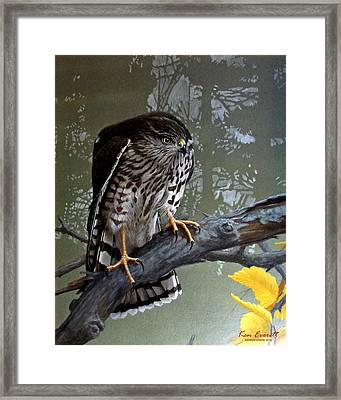 Young Sharpie Framed Print by Ken Everett