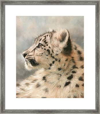 Young Snow Leopard Framed Print by David Stribbling
