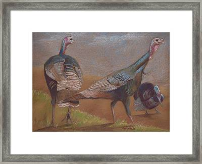 Young Toms Framed Print by Pam Little