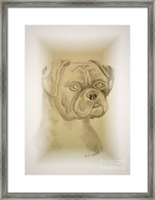 Youngster - Bull Mastiff Framed Print by Maria Urso