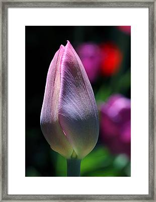 Youth And Beauty Framed Print by Rona Black