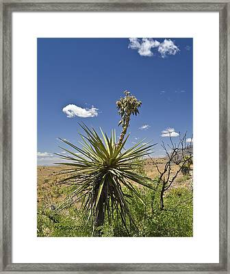 Yucca Fights Back Framed Print by Allen Sheffield