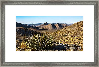 Yucca In High Deaert Framed Print by Robert Bales