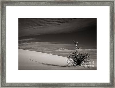 Yucca In The Sandsiii Framed Print by Sherry Davis